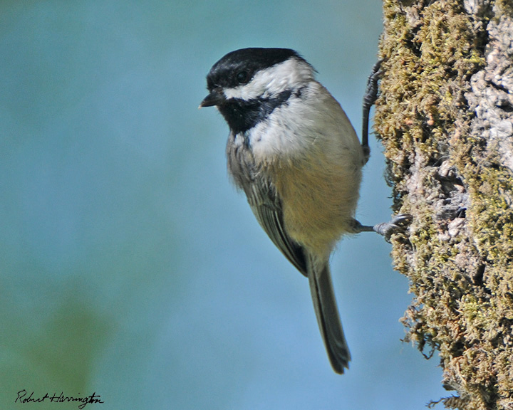 Birds of California, Oregon, and Washington